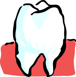 tooth-25594_1280